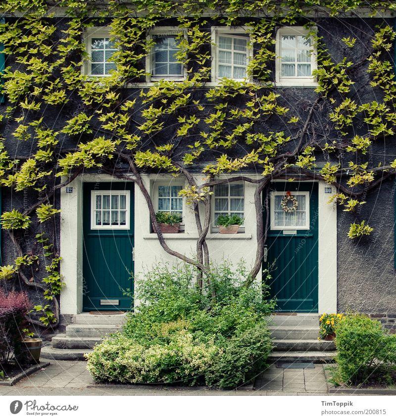 Im Wunderland #1 Haus Fassade Fassadenbegrünung Märchen Märchenschloss Tür Fenster Vorgarten Verhext Efeu Wand Mauer Butzenscheibe fantastisch Baum Ast Heimat