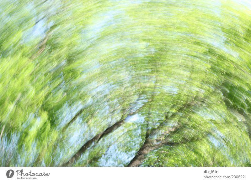 Waldstrudel Natur Baum grün blau Frühling Stimmung Umwelt drehen Drehung rotieren kreisen Schwindelgefühl