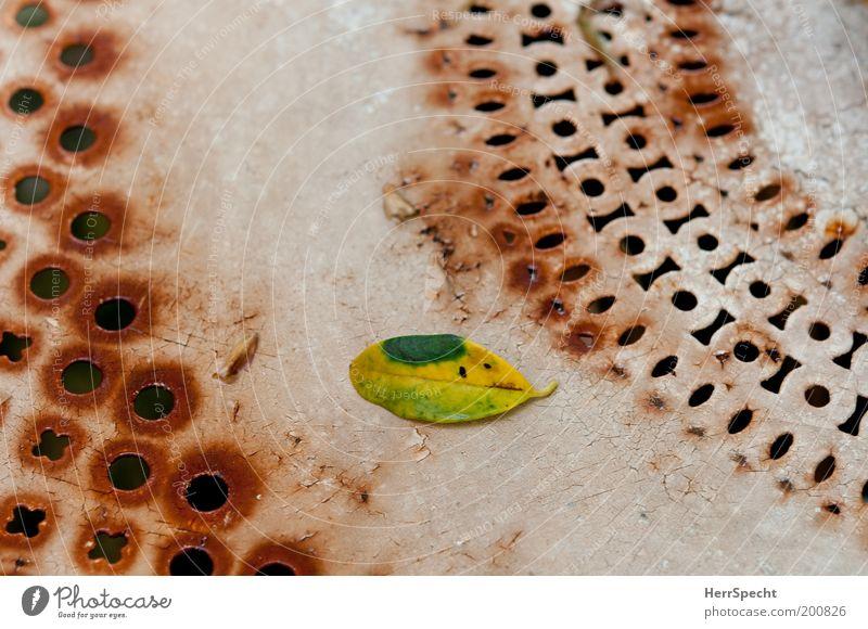 Lochfraß? Gartentisch Blatt Grünpflanze Metall Rost braun grün weiß Muster welk Kratzer lackiert Lack Farbfoto Gedeckte Farben Außenaufnahme Nahaufnahme