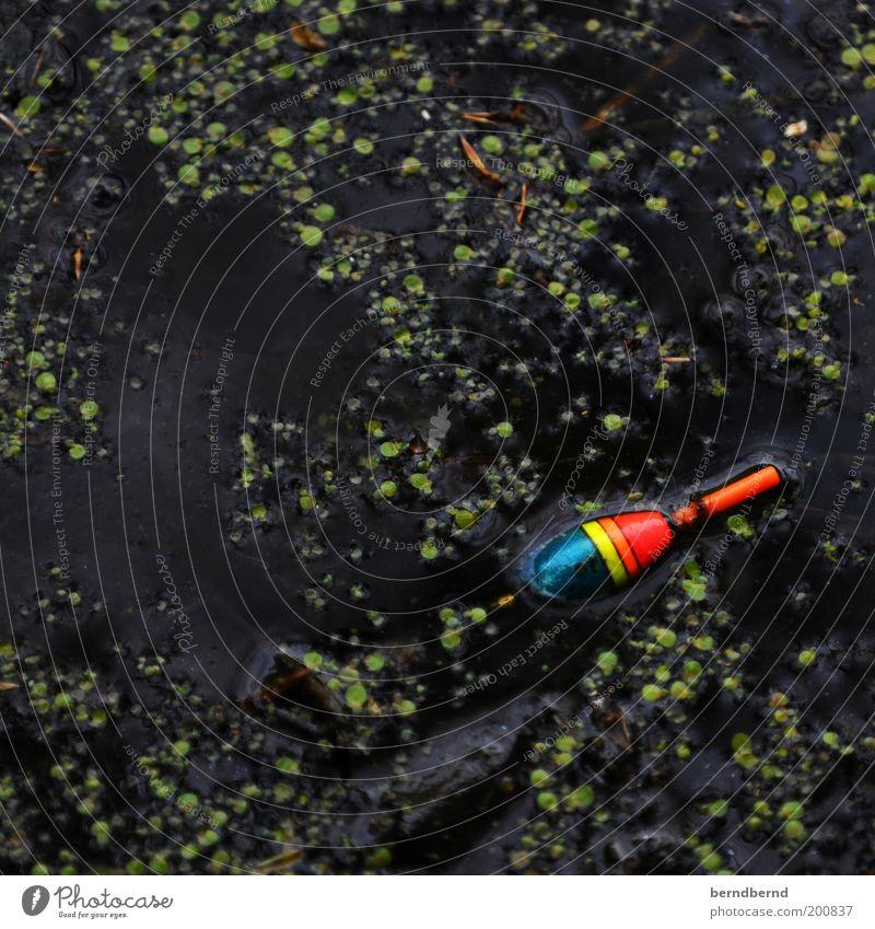 Der Angler Angeln Natur Wasser Pflanze Teich Angelköder fangen dunkel Flüssigkeit nah nass trist mehrfarbig grün schwarz Vorfreude Neugier Freizeit & Hobby