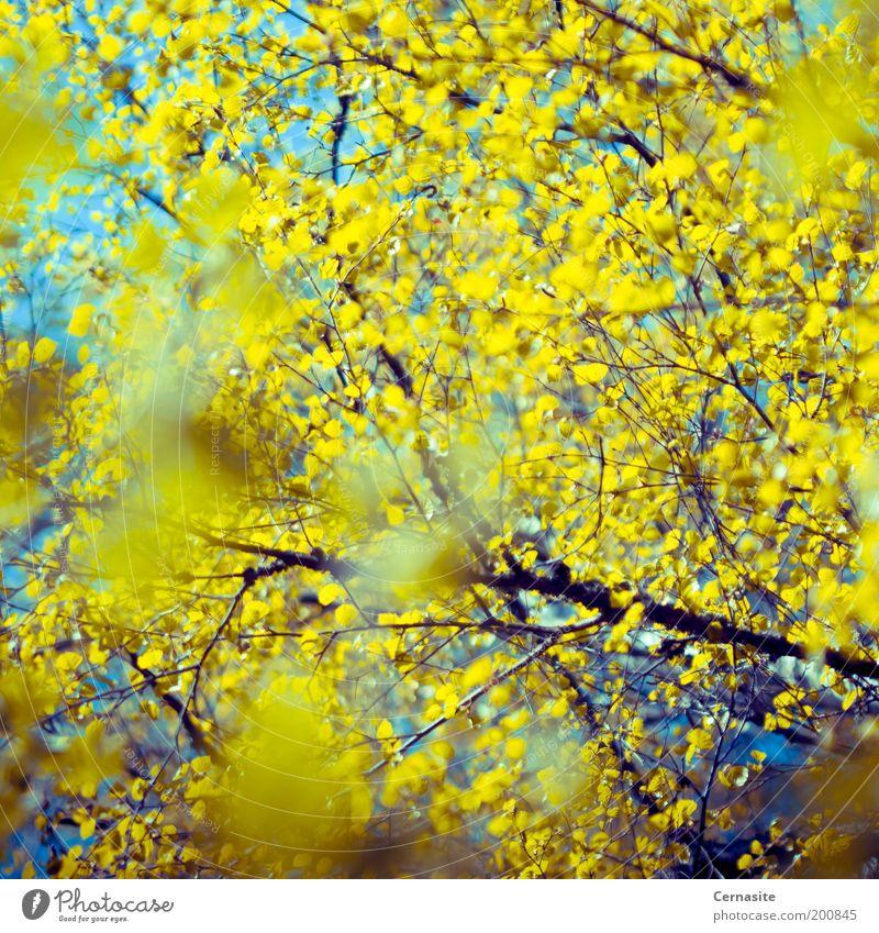 Himmel Natur blau Baum Pflanze Ferne gelb Frühling hell außergewöhnlich verrückt ästhetisch Europa einzigartig weich Unendlichkeit