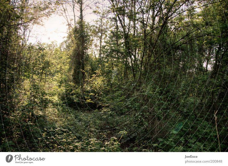 welcome to the jungle... Natur schön Baum Pflanze Wald Spielen Umwelt Garten Kraft Freizeit & Hobby wild Sträucher Urwald Gartenarbeit unterwegs Expedition
