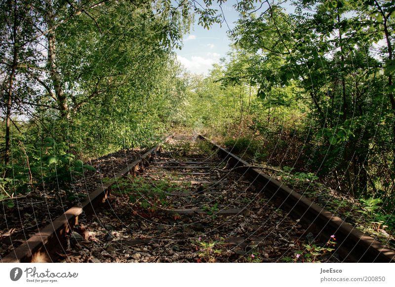 last train to... Natur Baum Pflanze Ferien & Urlaub & Reisen Wald Freiheit Umwelt Gras Frühling Freizeit & Hobby Ausflug wild Sträucher verfallen Gleise Verfall