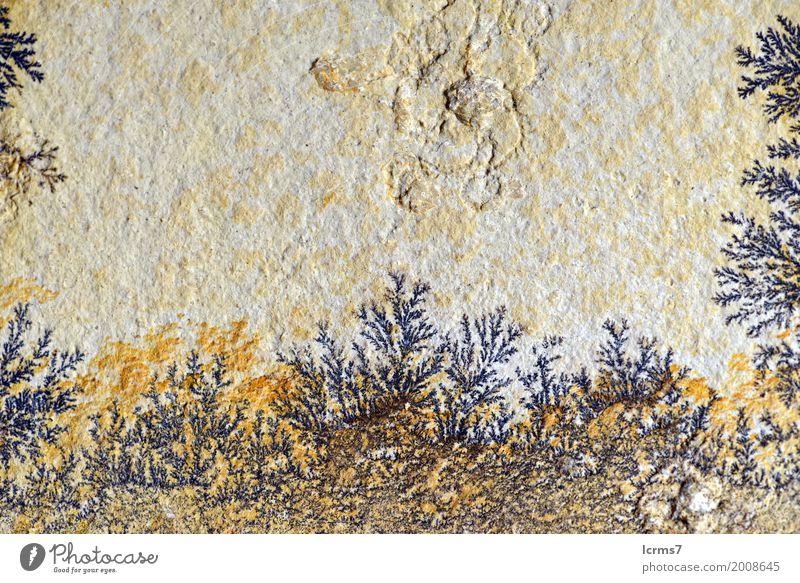 Dendrite in limestone rock. found in solnhofen (Germany) Felsen Wissen dendrite structure Mineralien geology pattern building science fossil carbonate history