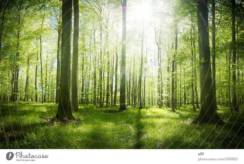 ...first light Natur schön Baum grün Pflanze Einsamkeit Wald Erholung Frühling träumen hell Stimmung Erde Umwelt frei Sauberkeit