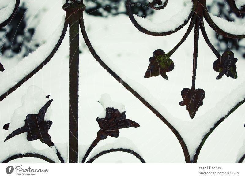 zaun weiß Pflanze Winter schwarz Schnee Eis hell Herz Wetter Frost Kitsch Dekoration & Verzierung Rost Zaun Ornament Symmetrie