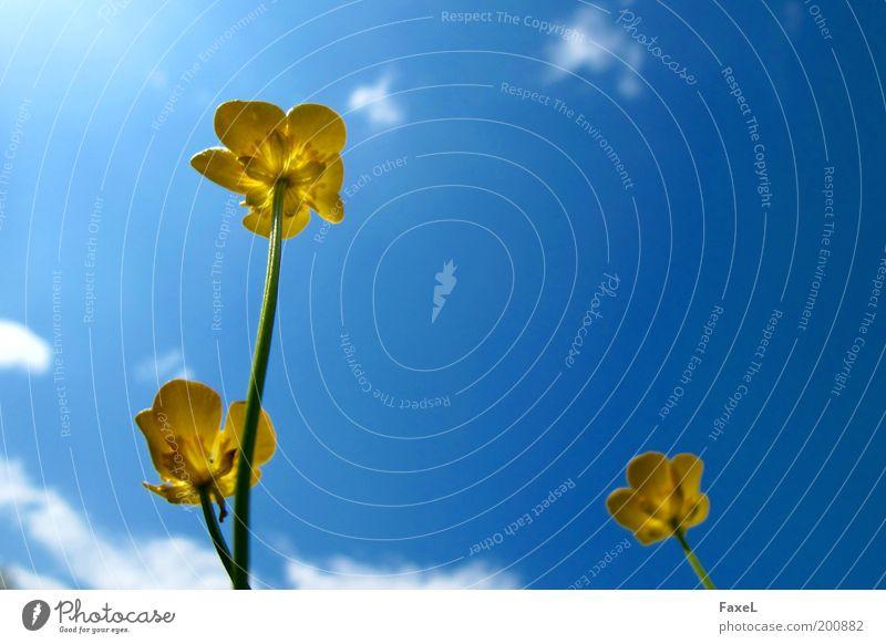 Endlich wieder Sonne 2 Natur Himmel Sonnenlicht Frühling Schönes Wetter Blume Blüte Wiese ästhetisch elegant blau gelb Zufriedenheit Warmherzigkeit Erholung