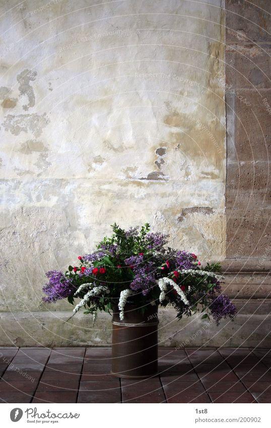 Strauß Umwelt Natur Pflanze Blume Kirche Dom Mauer Wand Blumenstrauß Blüte Säule Boden Stein Steinplatten Vase Kübel Farbfoto Textfreiraum oben