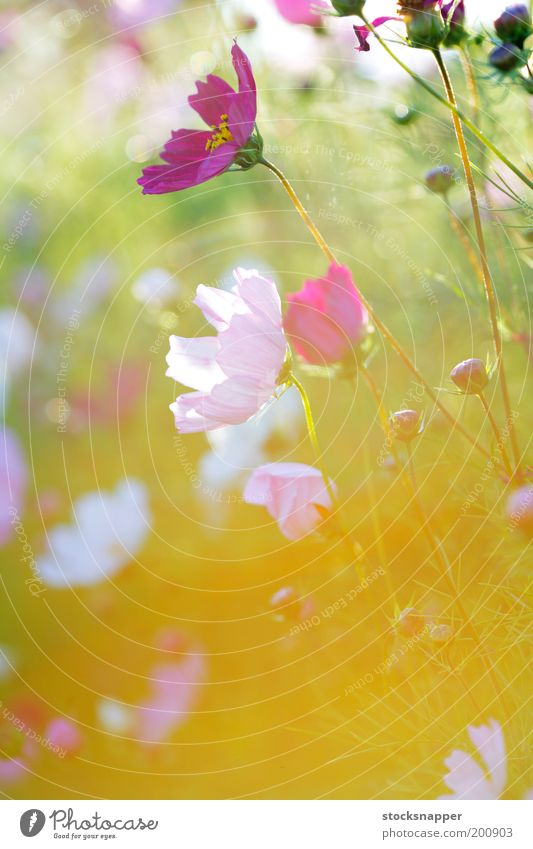 Blume Sommer Licht