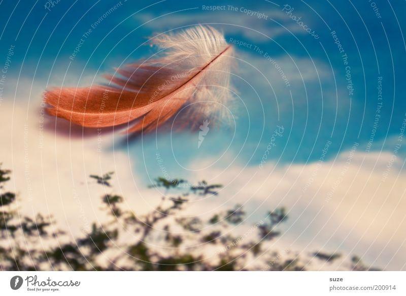 Windkind Himmel Natur Himmel (Jenseits) schön Landschaft Wolken Umwelt natürlich Stil Lifestyle außergewöhnlich Freiheit Dekoration & Verzierung frei Feder