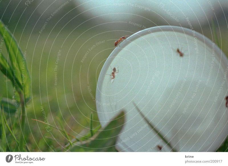 A-meise Natur Pflanze Sommer Tier Wiese Gras Garten Park Neugier Müll Insekt Festessen krabbeln Becher Umweltverschmutzung Ameise