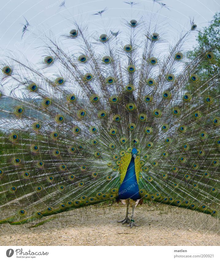 Pf.ausblick Himmel Natur Wasser blau schön Tier Gefühle Sand Vogel gold ästhetisch stehen Aussicht exotisch Symmetrie Vorfreude