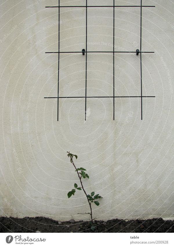 Tristesse Natur Blume Pflanze Einsamkeit Wand Gefühle Garten Stein Mauer Linie Metall klein Beton Beginn Erde Fassade