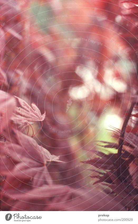 Für die Romantiker Natur schön Pflanze ruhig Blatt Farbe Wärme rosa weich zart natürlich Idylle exotisch