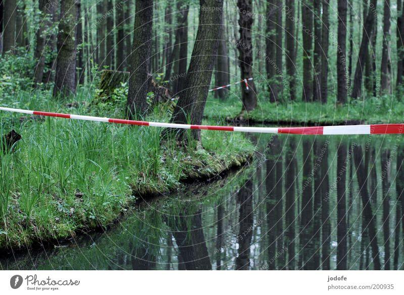 Absperrung Natur Wasser weiß Baum Pflanze rot ruhig Einsamkeit Wald kalt Gras Frühling Landschaft Umwelt Fluss Urwald
