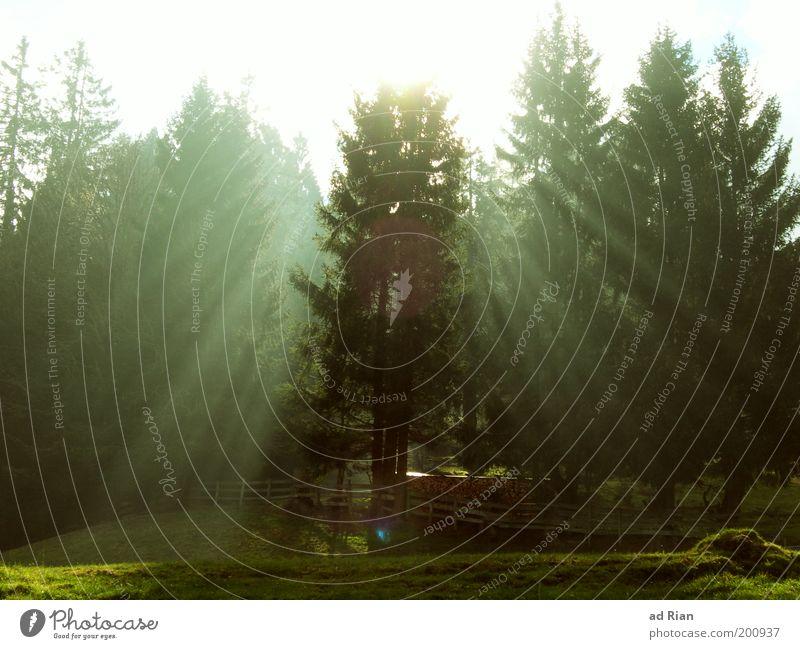 Die Erleuchtung Natur Landschaft Sonnenlicht Nebel Baum Wiese Wald Hügel glänzend leuchten natürlich ruhig elegant Gelassenheit Zufriedenheit Farbfoto