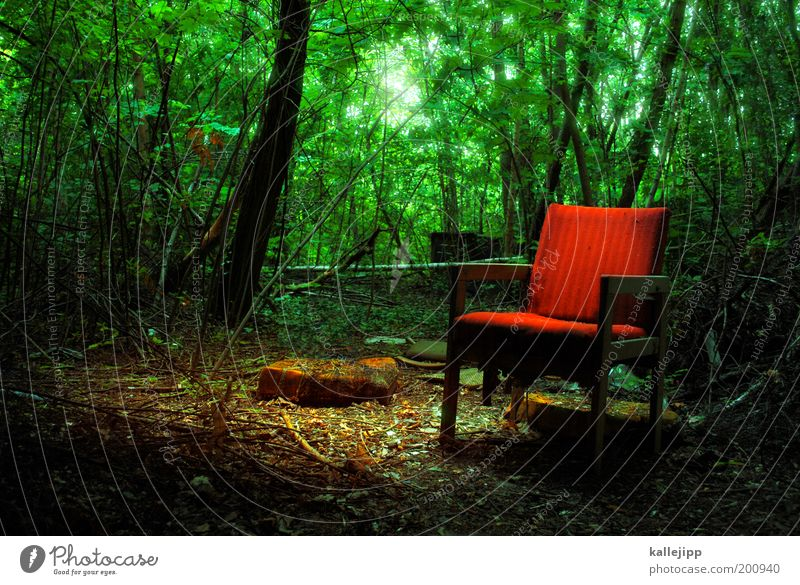 märchenwald Stuhl Arbeit & Erwerbstätigkeit Büroarbeit Arbeitsplatz Landwirtschaft Forstwirtschaft Umwelt Natur Erde Frühling Sommer Pflanze Baum Sträucher