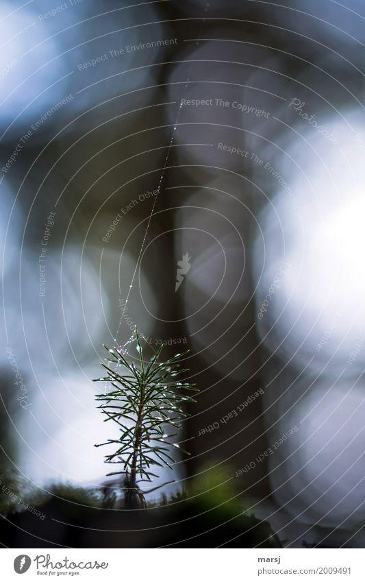 Neues Leben an der Sicherungsleine Natur Pflanze Baum dunkel Traurigkeit natürlich Wachstum frisch Kraft Erfolg authentisch Wassertropfen nass Hoffnung Trauer