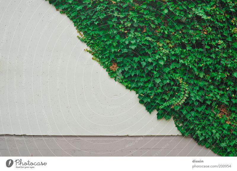 concrete vs. nature Natur grün weiß Pflanze Blatt Wand grau Gebäude Mauer Beton natürlich Wachstum Bauwerk diagonal Hälfte Gegenteil