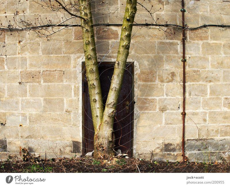 Saurier steht vor der Tür (Idee von time.) Baumstamm geschlossen davor stehen Steinmauer Barriere ausweglos Metalltür Zahn der Zeit DDR Gedeckte Farben