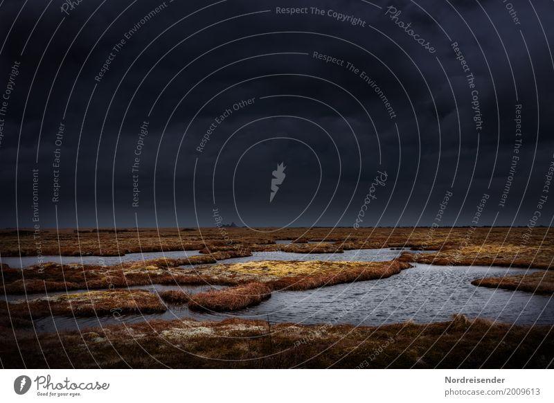 Sumpfland Natur Pflanze Wasser Landschaft Meer Einsamkeit Ferne dunkel Küste Gras Ausflug Angst Luft Insel Abenteuer nass