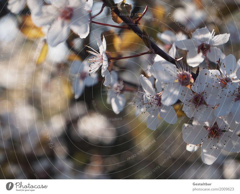 Dank Photocase das hier: Blumengrüße für Euch Umwelt Natur Landschaft Pflanze Tier Frühling Schönes Wetter Baum Sträucher Blüte Garten Blühend Duft Wachstum