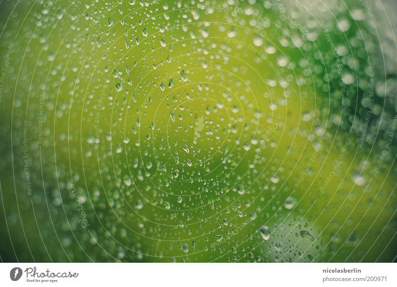 Glas Klar Wasser Baum grün Pflanze ruhig Fenster Frühling Traurigkeit Regen Wetter Umwelt Wassertropfen nass trist Tropfen