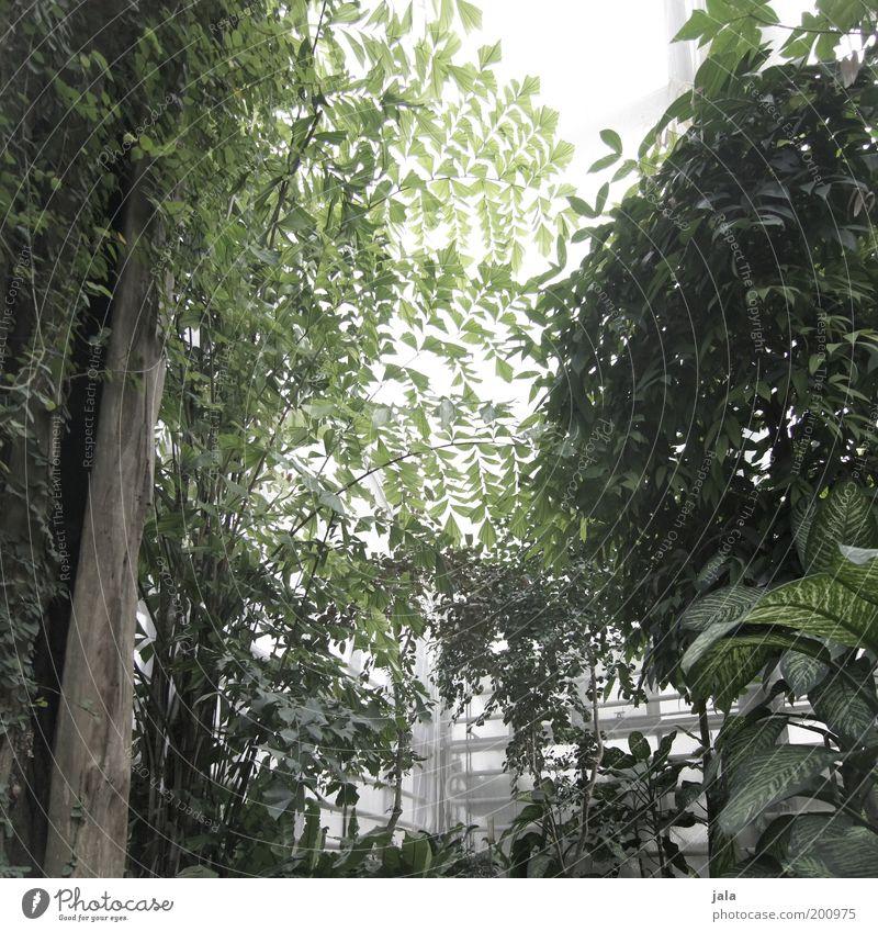 botanic garden II [LUsertreffen 04|10] Baum grün Pflanze Blatt Garten Wärme Sträucher Urwald Grünpflanze Gewächshaus Wildpflanze Tropenhaus