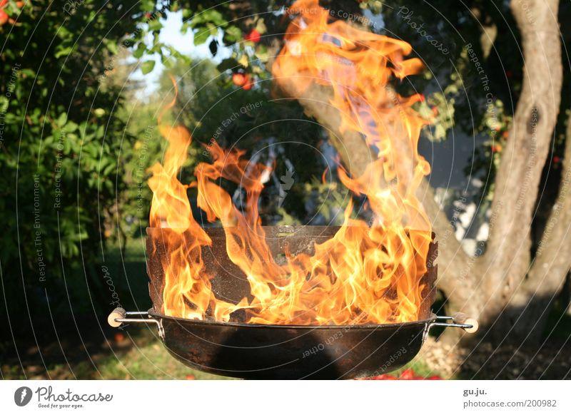 DER FLAMMENDE GRILL MK III Umwelt Natur Pflanze Feuer Baum Garten Wiese Grill heiß gelb rot gefährlich Grillen Wärme Apfel brennen Feuerstelle Feuerrost