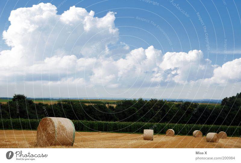Ein Herbstbild für ad Rian ruhig Ausflug Sommer Natur Landschaft Himmel Wolken Schönes Wetter Sträucher Wiese Feld rund Heuballen Ackerbau Landwirtschaft