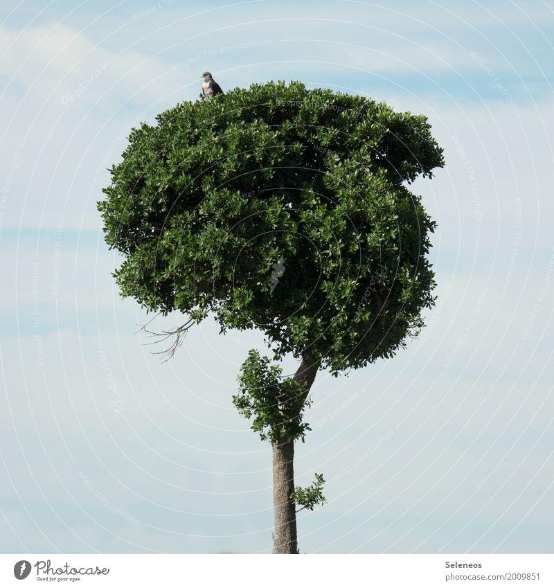 Schöne Aussicht Ausflug Abenteuer Ferne Freiheit Sommer Umwelt Natur Himmel Wolken Schönes Wetter Baum Tier Wildtier Vogel Bussard Greifvogel 1 klein natürlich