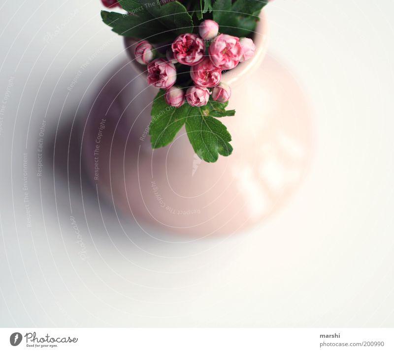rosarote Welt schön weiß Blume grün Pflanze Wohnung klein Perspektive Dekoration & Verzierung Häusliches Leben zart Vase