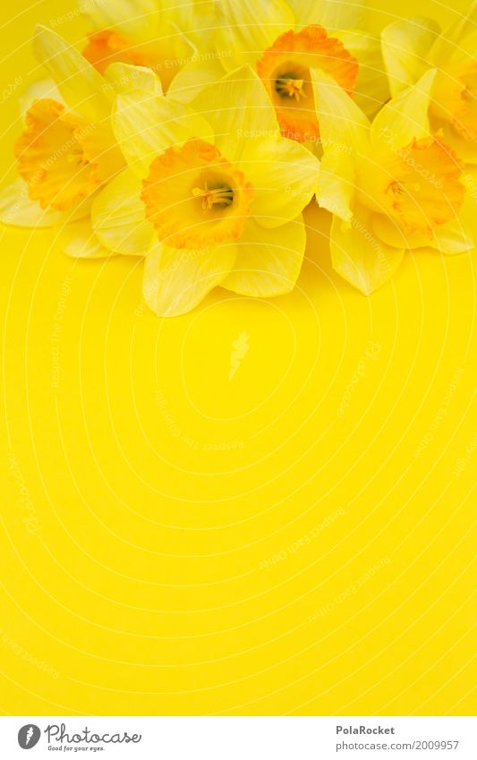 #AS# Ostergelb II Kunst Kunstwerk ästhetisch Narzissen knallig viele Ostern Osternest Osterwunsch Ostermontag Frühling Frühlingsgefühle Frühlingsblume