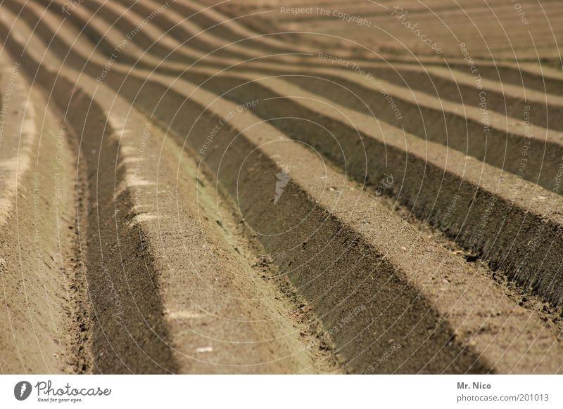 ^^^^^ Umwelt Natur Erde Feld braun Ernte Ackerbau Linie Horizont Unendlichkeit Hügel Saatgut Aussaat Wachstum Ackerboden Klima Kartoffelacker Kartoffeln Möhre