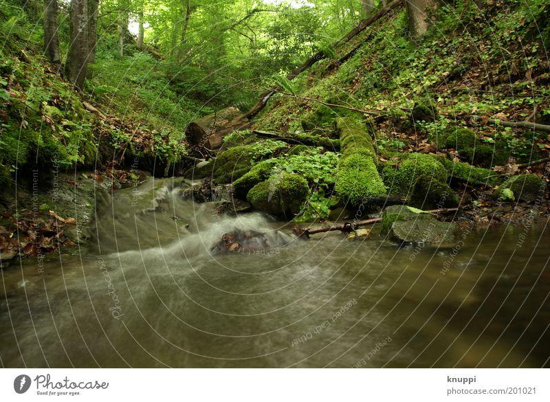 Unten am Fluss Natur Ferien & Urlaub & Reisen grün Sommer Pflanze Baum Landschaft Wald Umwelt Idylle Sträucher Flussufer Bach Moos fließen Farn