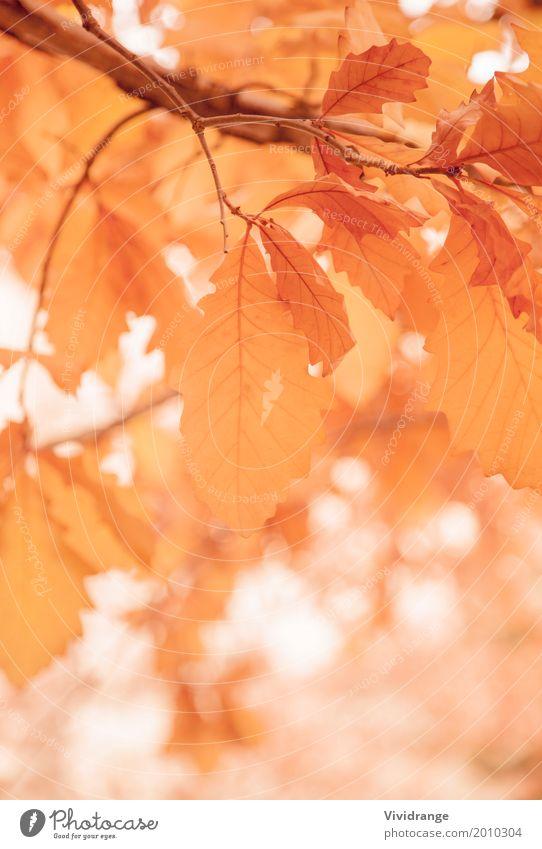 Blätter an einem sonnigen Morgen, Herbstsaison Natur Pflanze Frühling Baum Park Wald Wärme orange weiß Romantik Farbe Ferien & Urlaub & Reisen Blatt Baumstamm