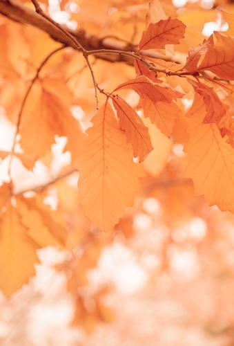 Blätter an einem sonnigen Morgen, Herbstsaison Natur Ferien & Urlaub & Reisen Pflanze Farbe weiß Baum Blatt Winter Wald Wärme Frühling Garten orange Park