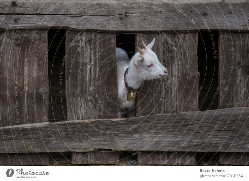 Ja, wo bleibt denn der Sommer? weiß Tier Tierjunges Gebäude klein Glück Denken braun Idylle Fröhlichkeit Beginn warten beobachten niedlich Freundlichkeit