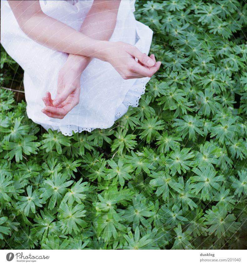 x schön Haut Mensch feminin Junge Frau Jugendliche Arme Hand Finger Natur Rock Kleid Duft genießen Wachstum warten grün weiß Glück Vertrauen ruhig Hoffnung