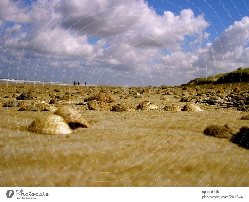 Muschelinflation II Himmel Ferien & Urlaub & Reisen blau Wasser Sommer Meer Landschaft Wolken Strand Umwelt Stein Sand braun Horizont Freizeit & Hobby Erde