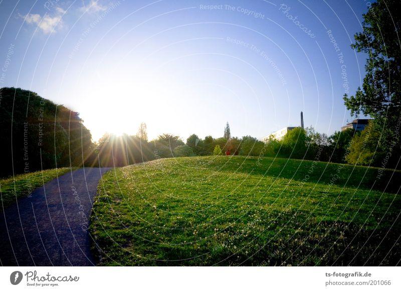 Sunset Boulevard Natur Pflanze Himmel Wolkenloser Himmel Sonne Sonnenaufgang Sonnenuntergang Sonnenlicht Frühling Sommer Schönes Wetter Baum Gras Löwenzahn