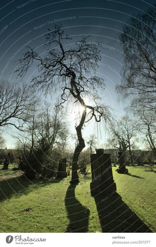 Ruhe Sonnenlicht Baum Friedhof Park leuchten träumen Traurigkeit dunkel historisch kalt blau grün Mitgefühl trösten ruhig Hoffnung Glaube Trauer Tod Einsamkeit