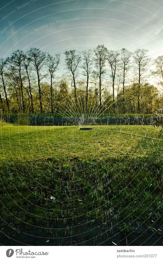 Rasensprenger Natur Wasser Baum grün Wald Wiese Gras Frühling Fluss Flussufer Erfrischung gießen Dürre Gartenarbeit Brandenburg