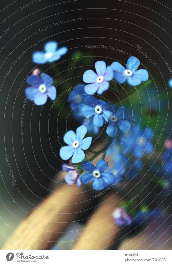 vergiss mich doch lieber Natur schön Blume blau Pflanze Sommer Gefühle Blüte Frühling Garten klein Dekoration & Verzierung zart Blühend Erinnerung Korb