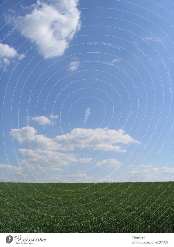 Wolken überm Gras Himmel weiß Sonne grün blau Sommer Wiese Schönes Wetter