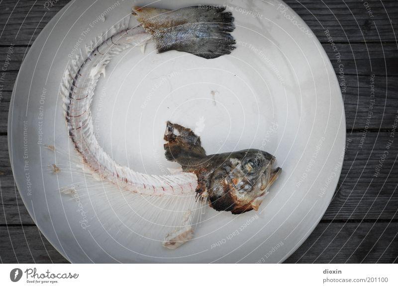 Fisch is´ alle, Baby! Natur Tier Auge Kopf liegen natürlich Lebensmittel Ernährung Fisch Fisch Vergänglichkeit Müll Ende Tiergesicht Teller Bioprodukte