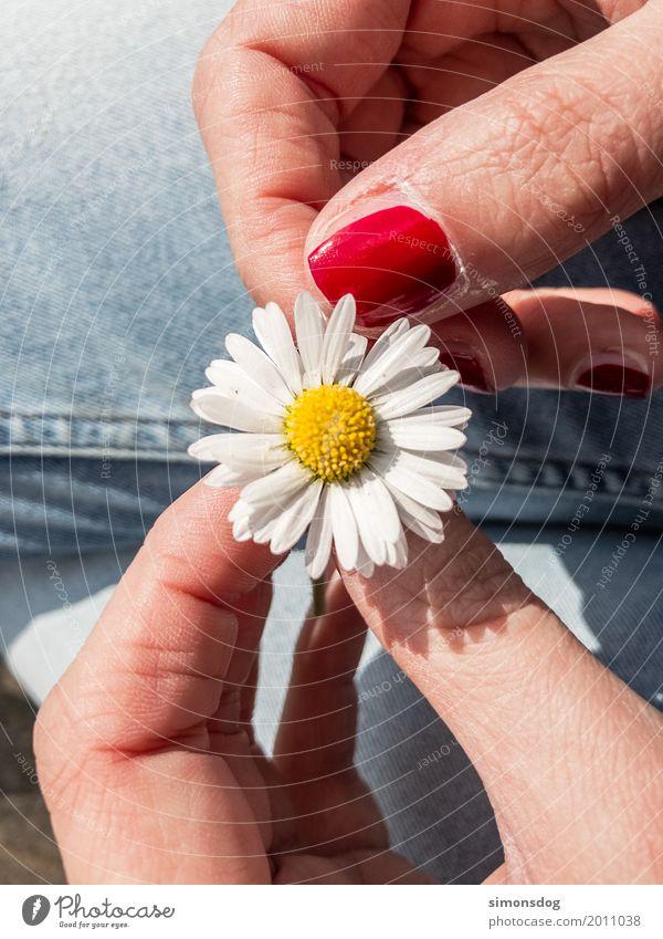 Liebe Sommer Hand Blume ruhig Freude Frühling Gefühle Glück Zufriedenheit warten Blühend Abenteuer Lebensfreude Finger Romantik
