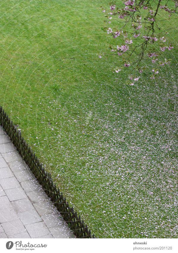 Schöne Pfingsten! Umwelt Natur Pflanze Frühling Baum Blüte Kirschbaum Kirschblüten Garten Wiese Zaun Glück Fröhlichkeit Lebensfreude Frühlingsgefühle