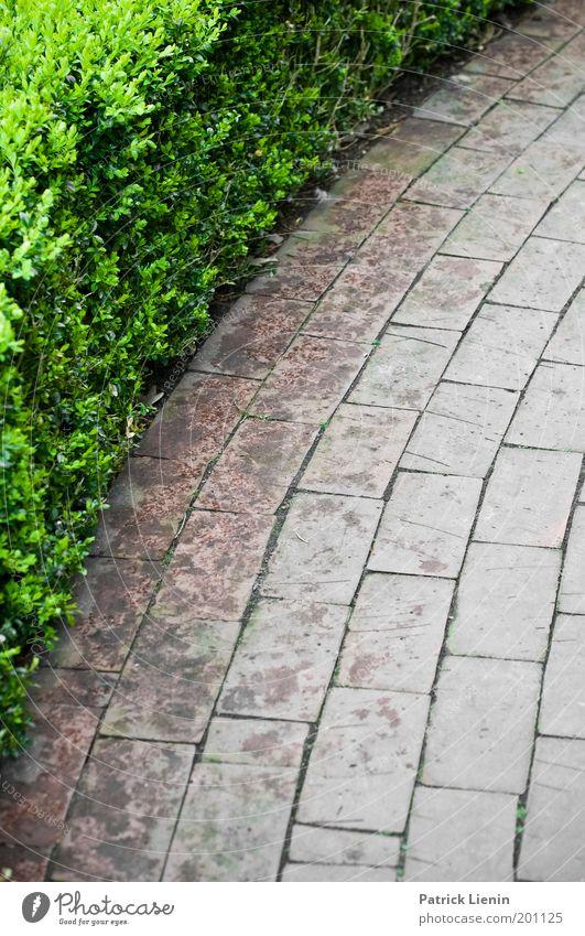 wohin führt der Weg? Grünpflanze laufen Wege & Pfade Pflastersteine buschig Hecke Linie Spaziergang Kontrast grün grau Park Farbfoto Außenaufnahme Menschenleer