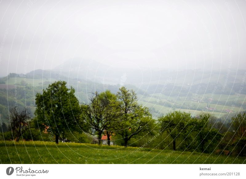 Trüb, aber grün Natur Himmel Baum Blume Pflanze Wolken Wald Wiese Gras Frühling Landschaft Nebel Umwelt Wachstum Klima
